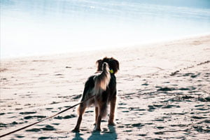 hondencoach