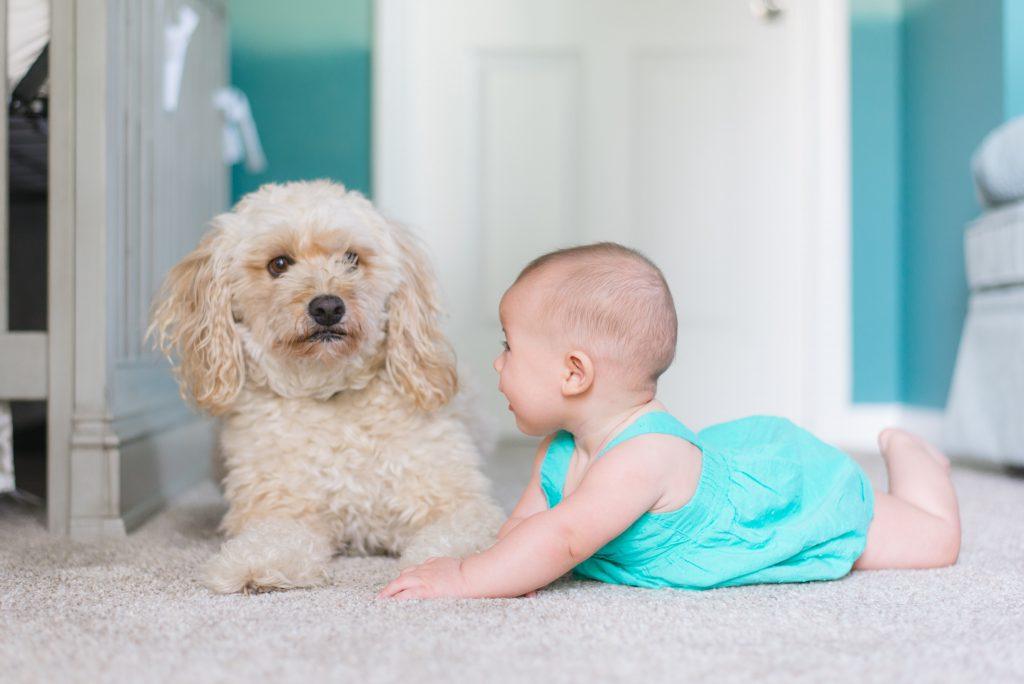 Hond aan baby laten wennen